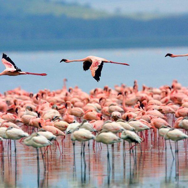 Safari tours at lake_nakuru_national