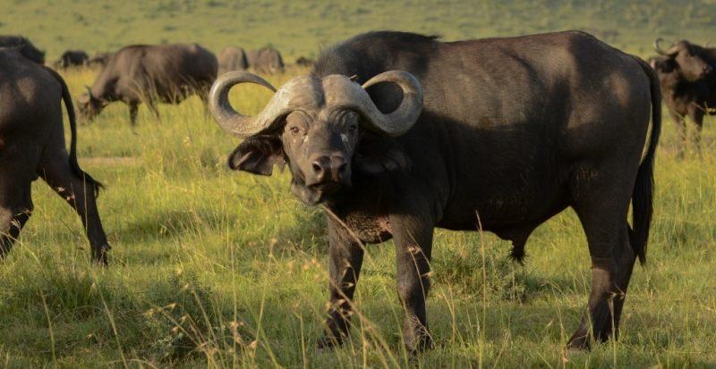 Safari tours at Lake Nakuru