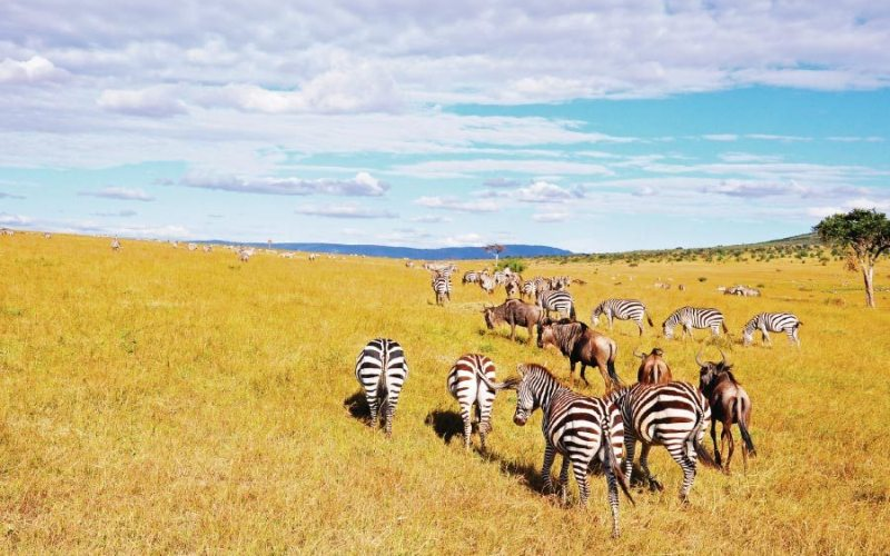 Best kenya safari tour at Maasai mara reserve