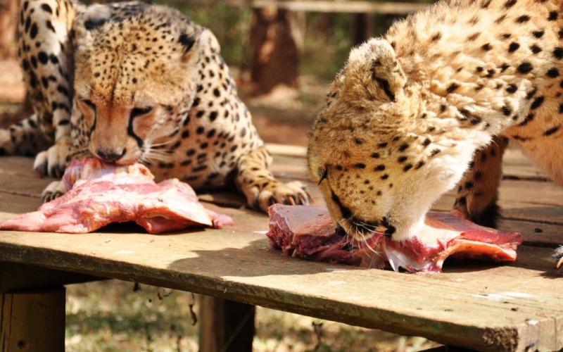 Safari tours at Nairobi Animal Orphanage
