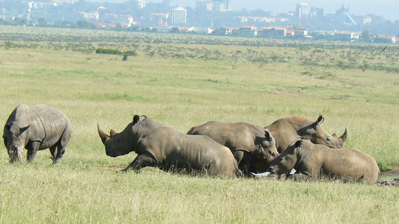 Safari tours at Nairobi National Park