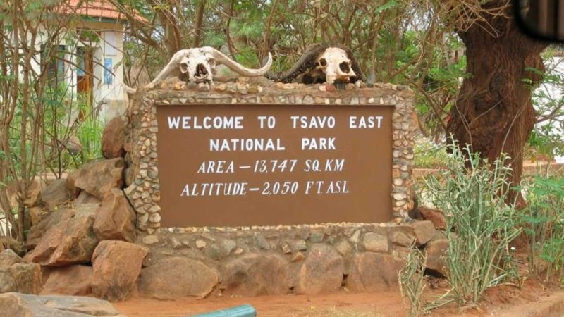 Safari tours at Tsavo-West