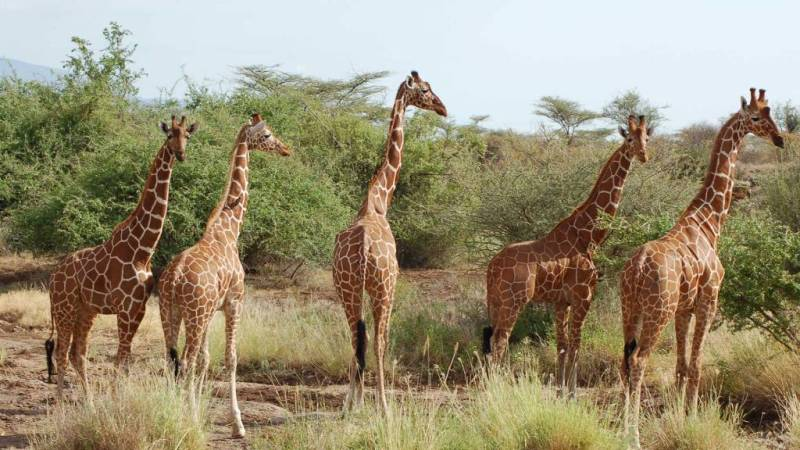 Safari tours at Tsavo-West