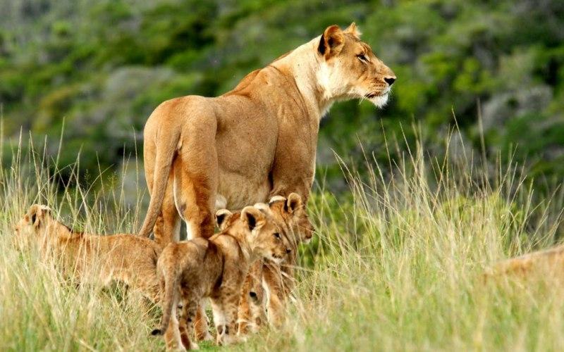 best kenya safari tours at Tsavo West National park