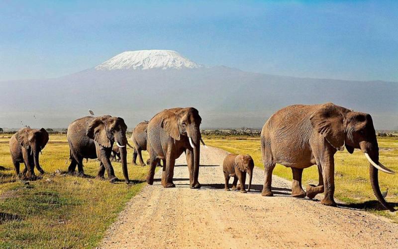 Safari tours at Amboseli