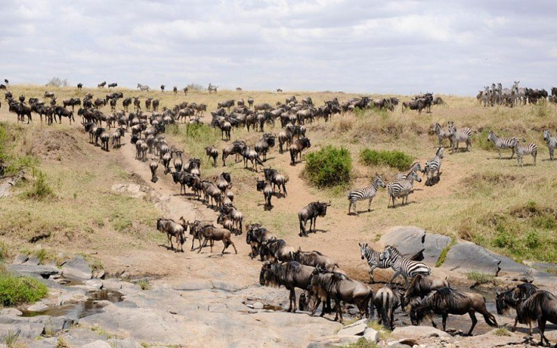 Safari tours at Maasai Mara Reserve