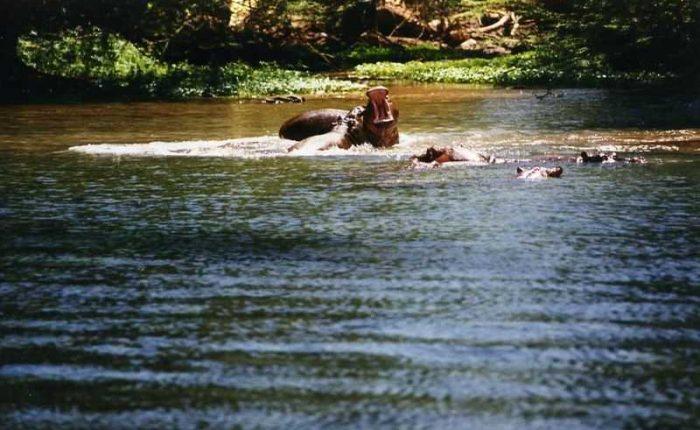 Safari tours at Emirates Tsavo-West-Mzima-Springs-Kenya