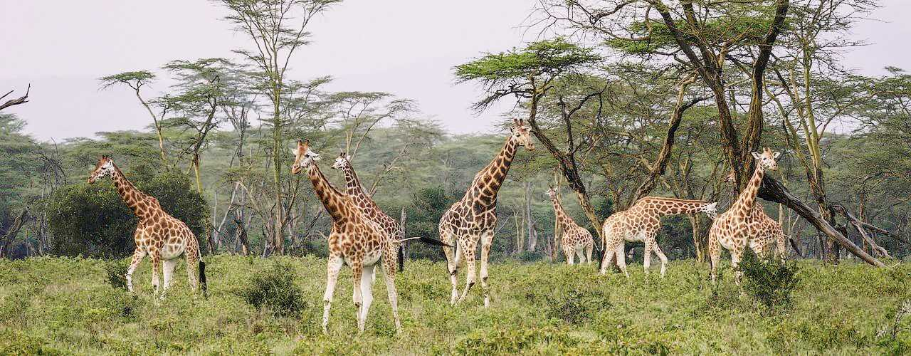 Safari tours at lake_nakuru_national