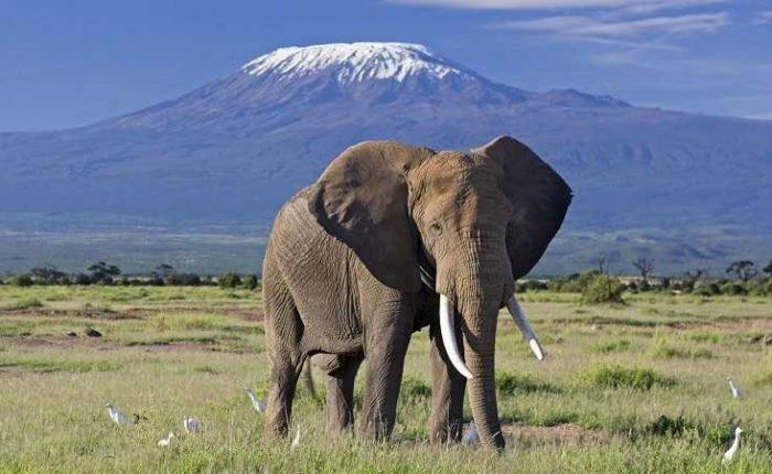 Tour at Elephant kilimanjaro-amboseli f