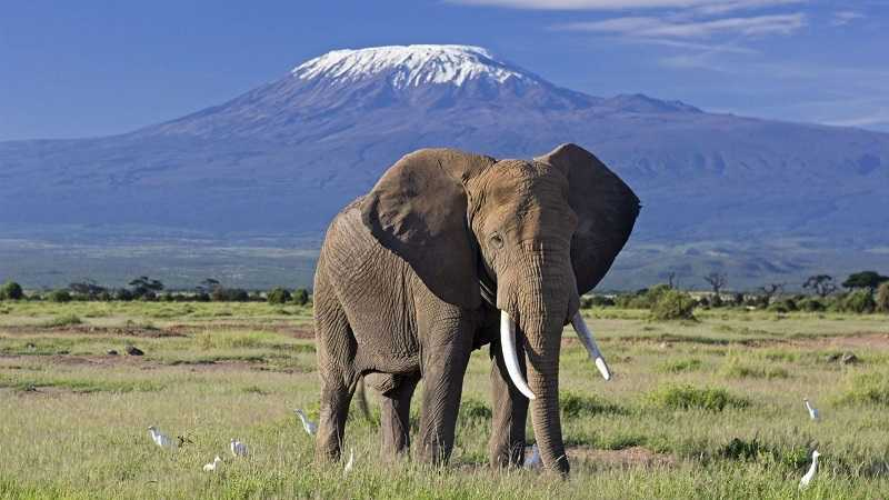 Tour at Elephant kilimanjaro-amboseli f